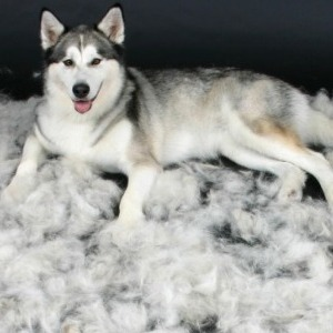 Por qu a mi perro se le cae el pelo mascotasonline la comunidad de mascotas m s grande de - En que meses se cae mas el pelo ...