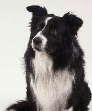 Se regalan perros de raza grande